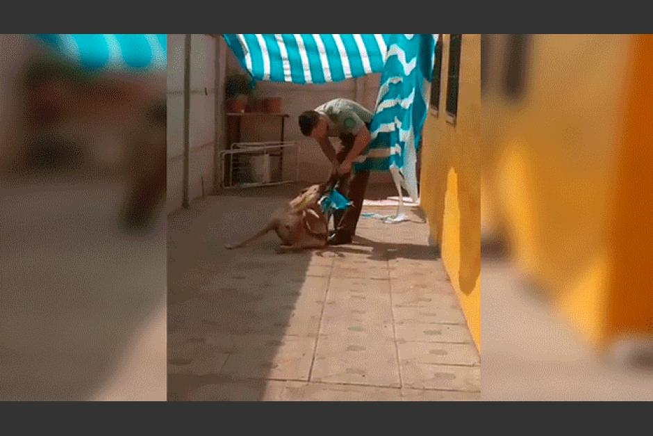 policia rescata a un perro de una forma tan peculiar