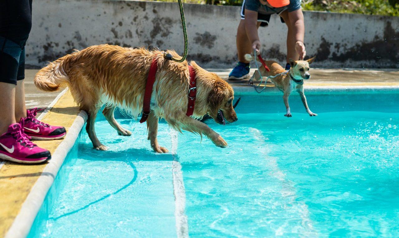 Eco parque canino, el lugar ideal para la diversión junto a tu mascota
