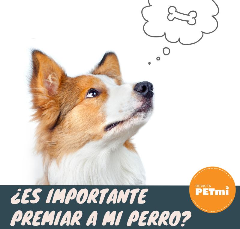 ¿Es importante premiar a mi perro_ Carnazas Naturals Miracle