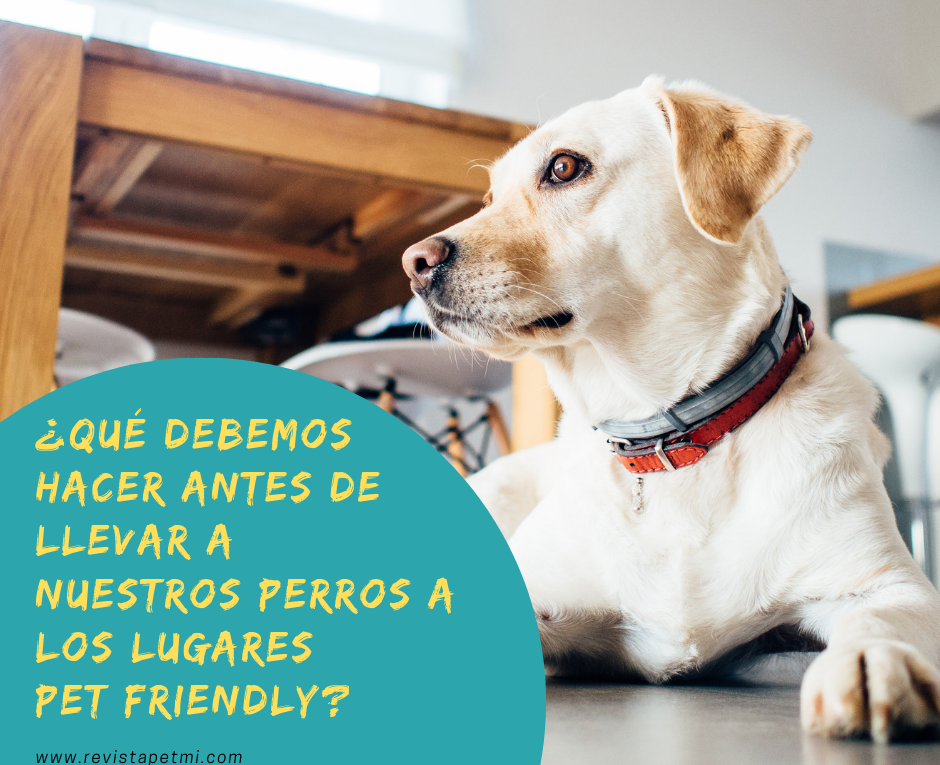 ¿Qué debemos hacer antes de llevar nuestros perros a un lugares Pet Friendly en Guatemala