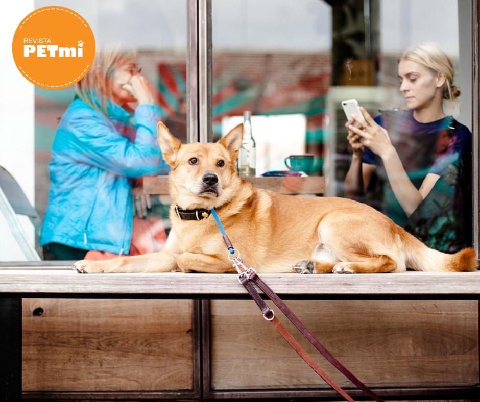 ¿qué debes hacer antes de llevar a tu mascota en lugares pet friendly?