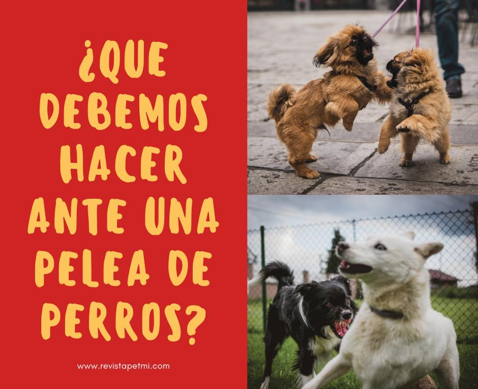 ¿Que debemos de hacer ante en una pelea de perros_ (3)
