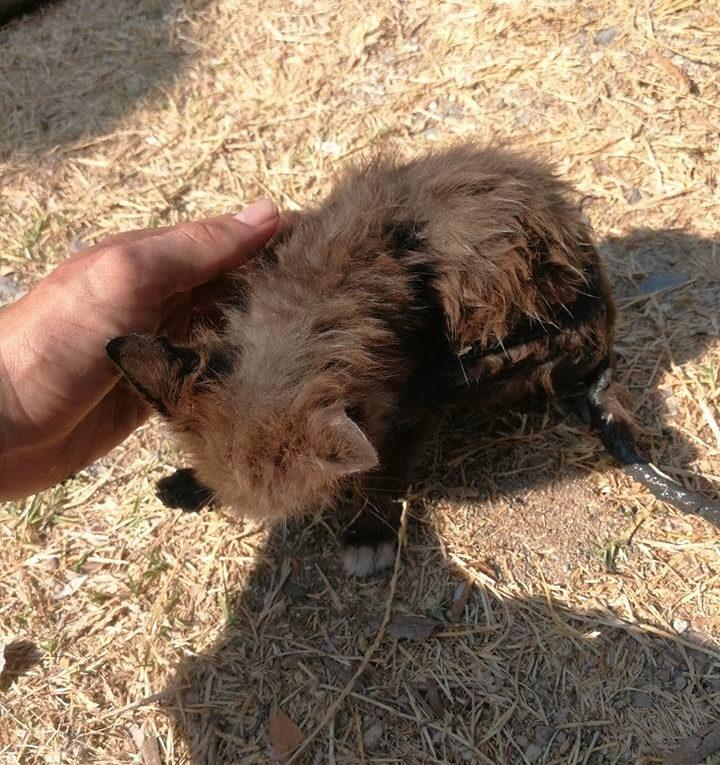 La conmovedora historia de un gatito, con mucha suerte!!!