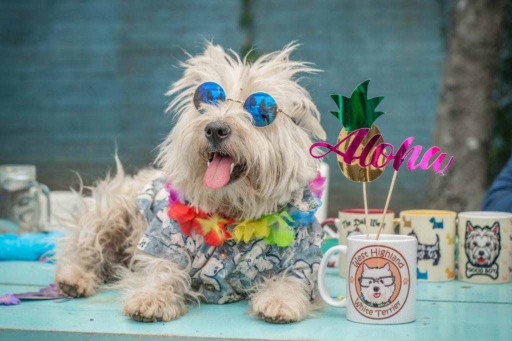 Westie Aloha