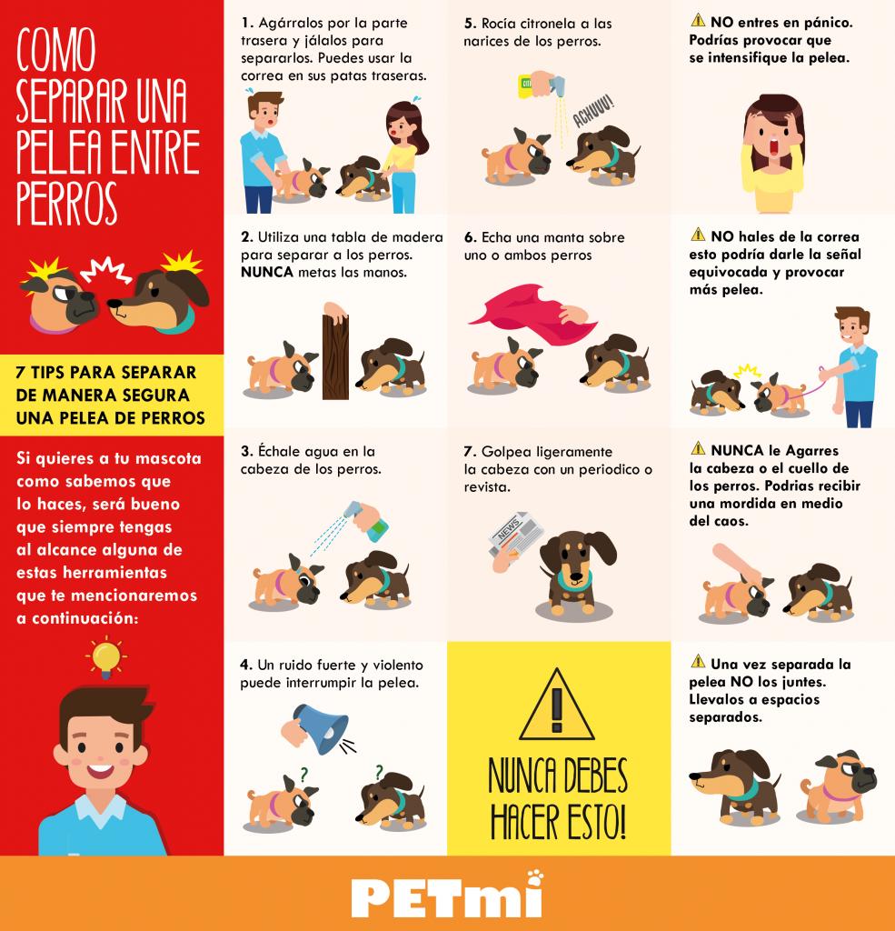 Como separar una pelea de perros