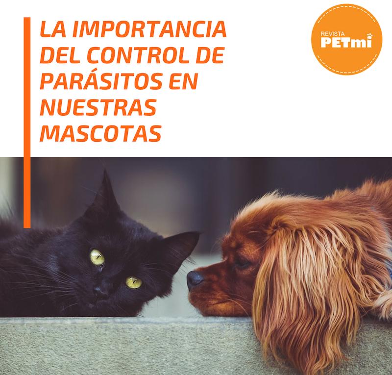 La importancia del control de parásitos en nuestras mascotas