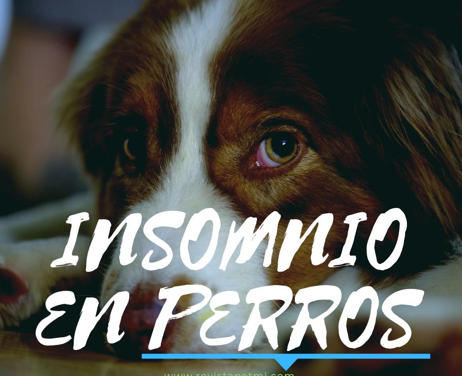 Un estudio, revela las causas de insomnio en perros