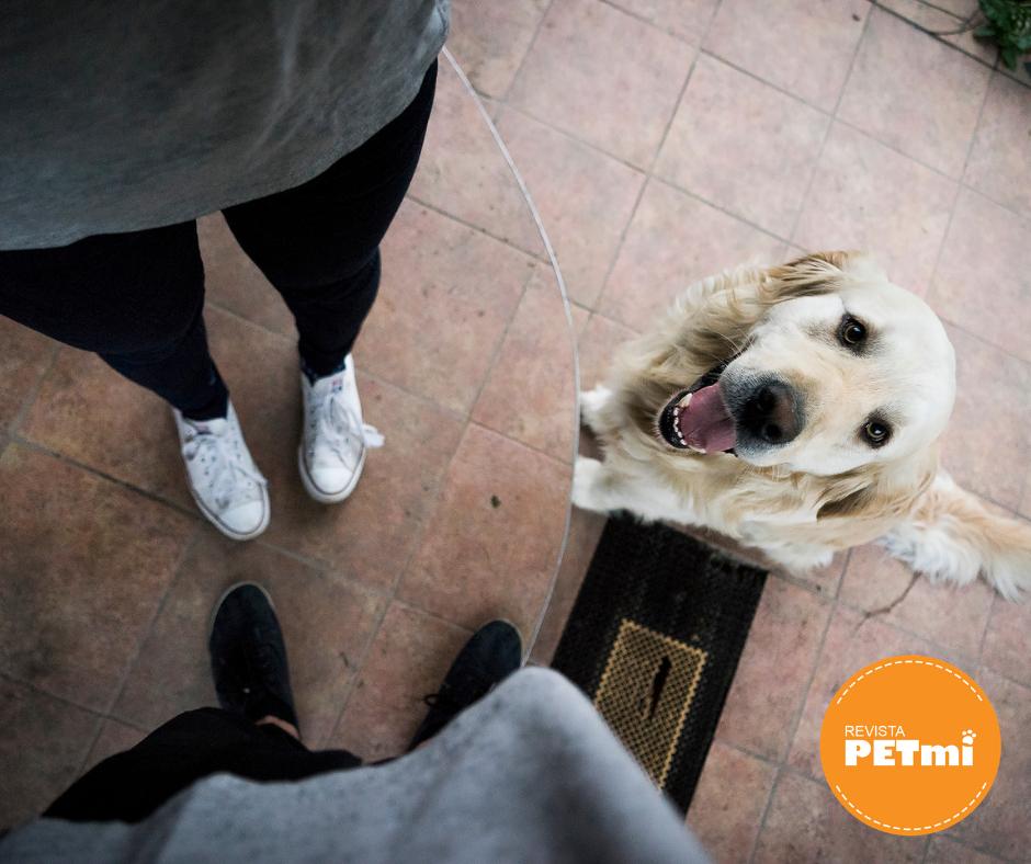 igue estas reglas de etiqueta cuando visites los lugares pet friendly  con tu perro, ayudará a que más establecimientos acepten a nuestros amigos peludos.