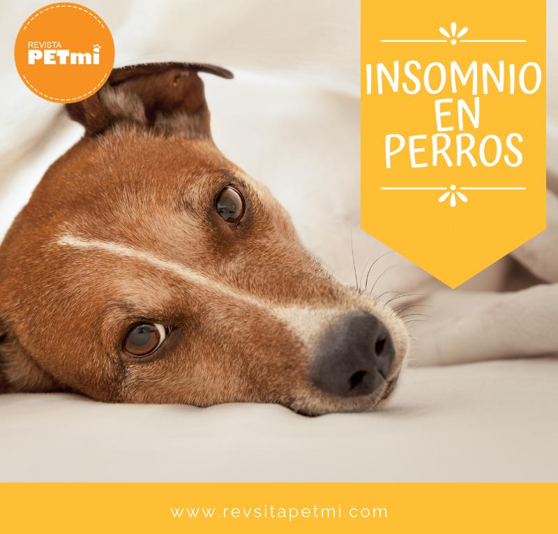 insomnio en perros