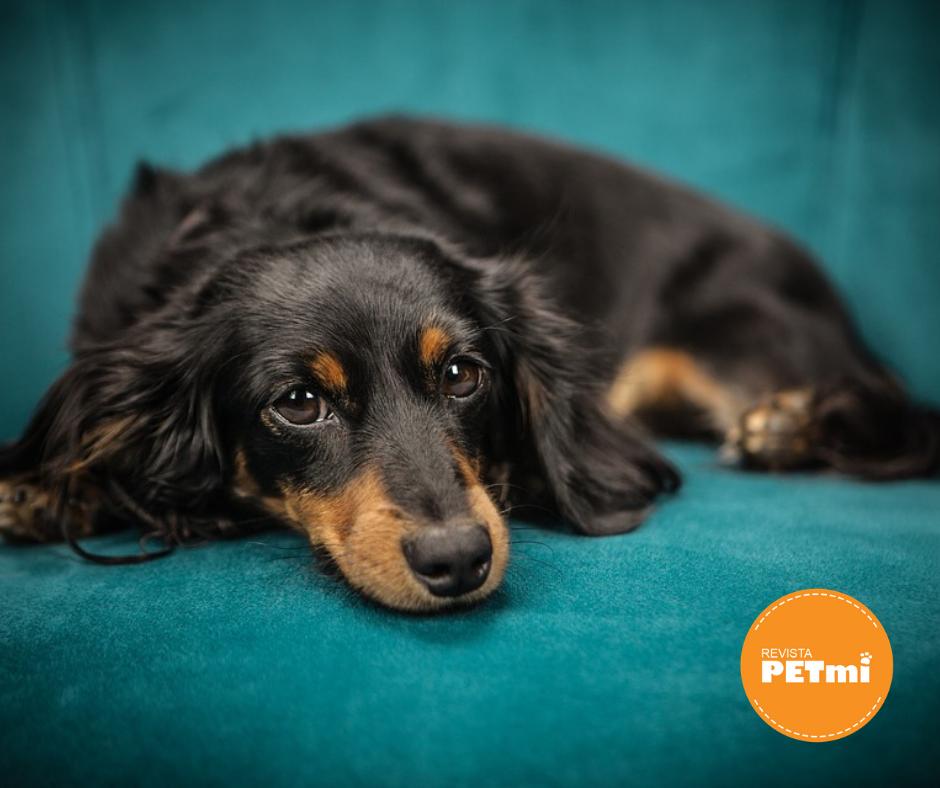 4 tips que te ayudarán a tener tu casa limpia si tienes mascotas, cuidados del sofá