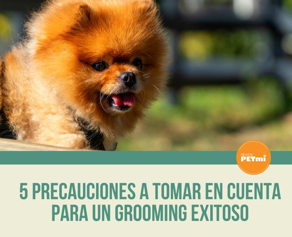5 precauciones a tomar en cuenta para Un grooming exitoso