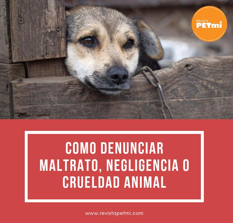 Como denunciar maltrato, negligencia o crueldad animal (1)