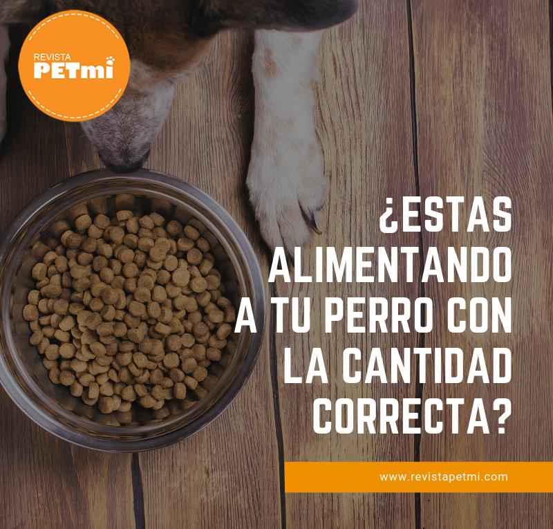 ESTAS ALIMENTANDO A TU PERRO CON LA CANTIDAD CORRECTA (1)