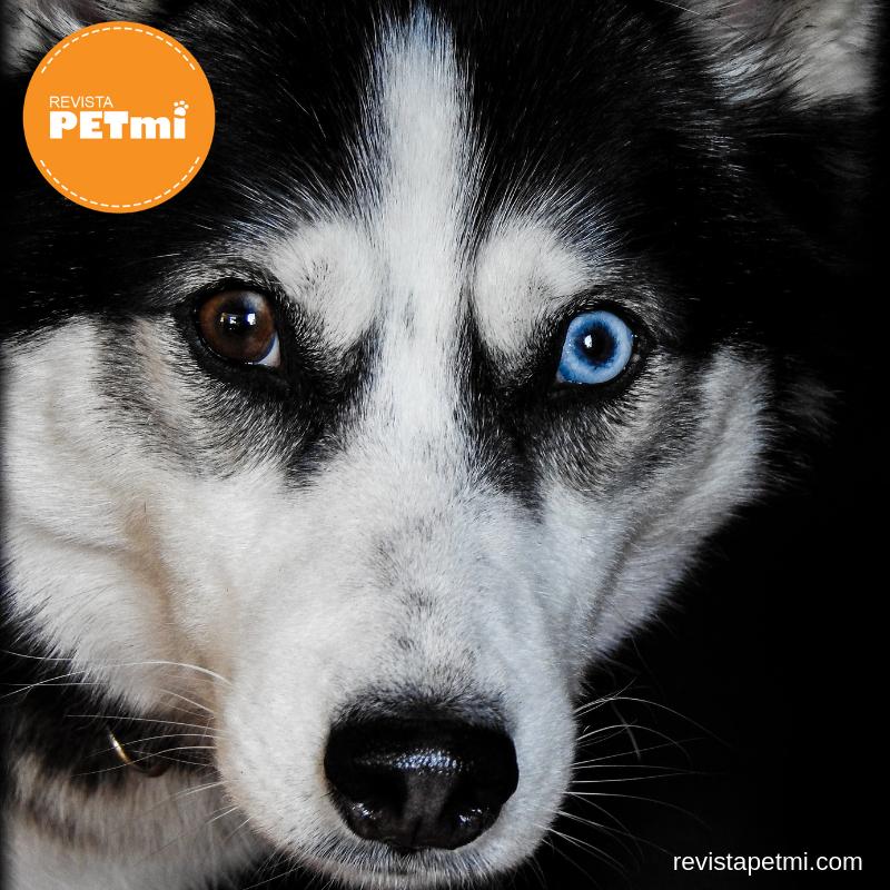 4 razas de perros rusos