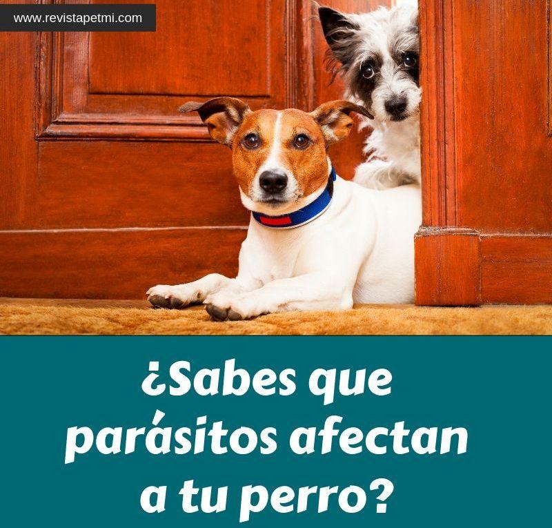 Sabes que parásitos afectan a tu perro, nuevo nexgard Spectra