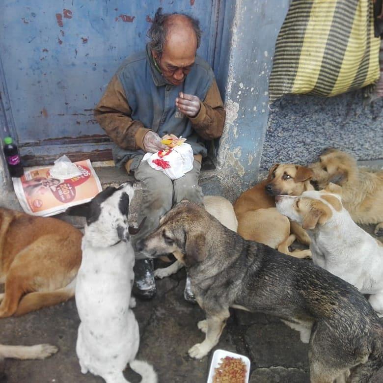 la historia de amor de Don Maquito y los perritos de la calle