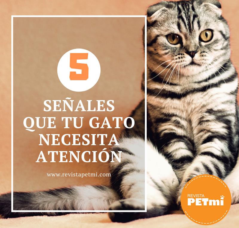 5 señales que tu gato necesita atención (2)