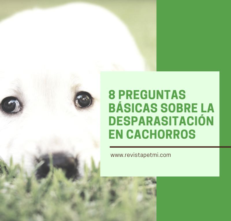 8 preguntas básicas sobre la desparasitación en nuestros cachorros