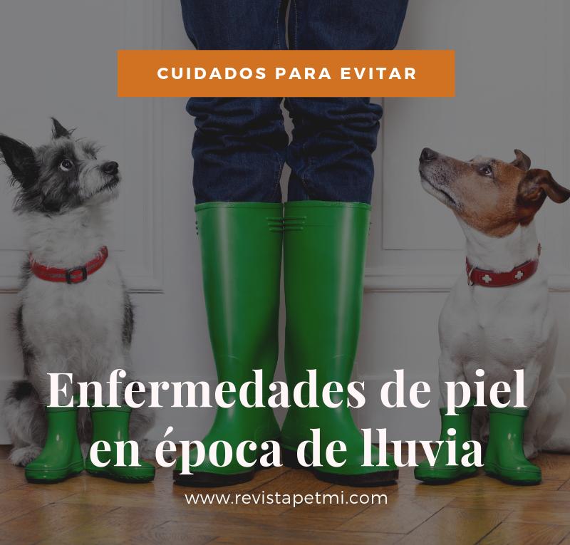 Cuidados para evitar enfermedades de piel en tu mascota en la época de lluvia