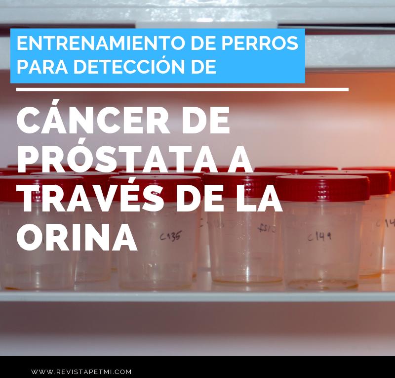Entrenamiento de perros para detección de cáncer de próstata a través de la orina-Purina pro plan
