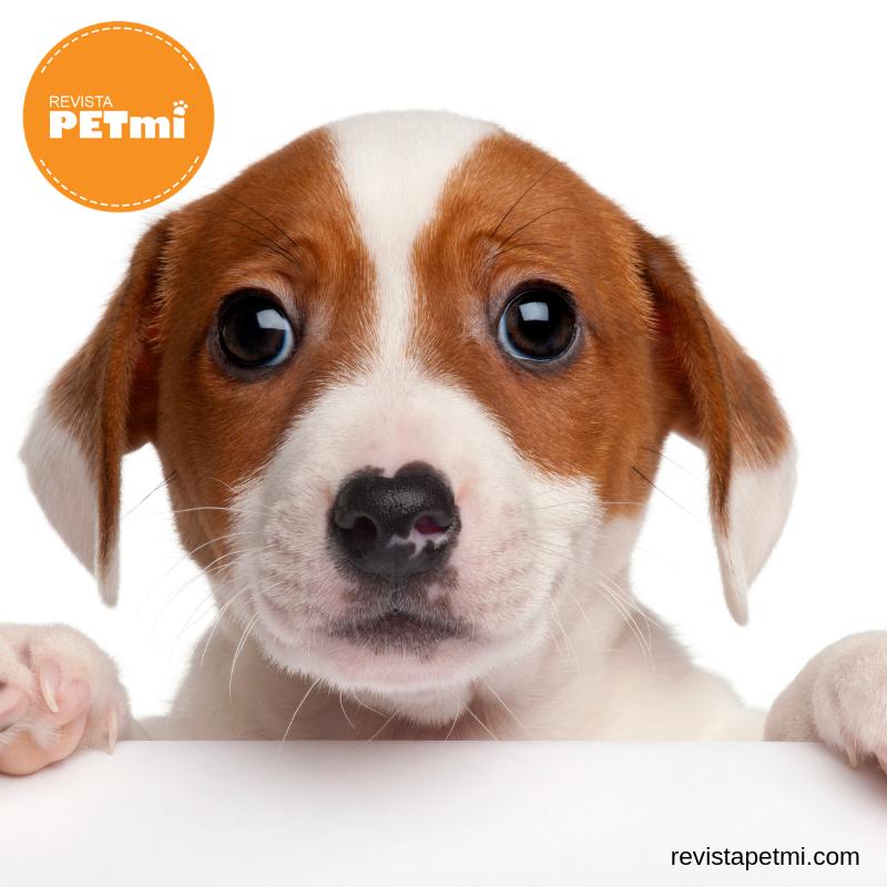 desparasitación en nuestros cachorros  (1)