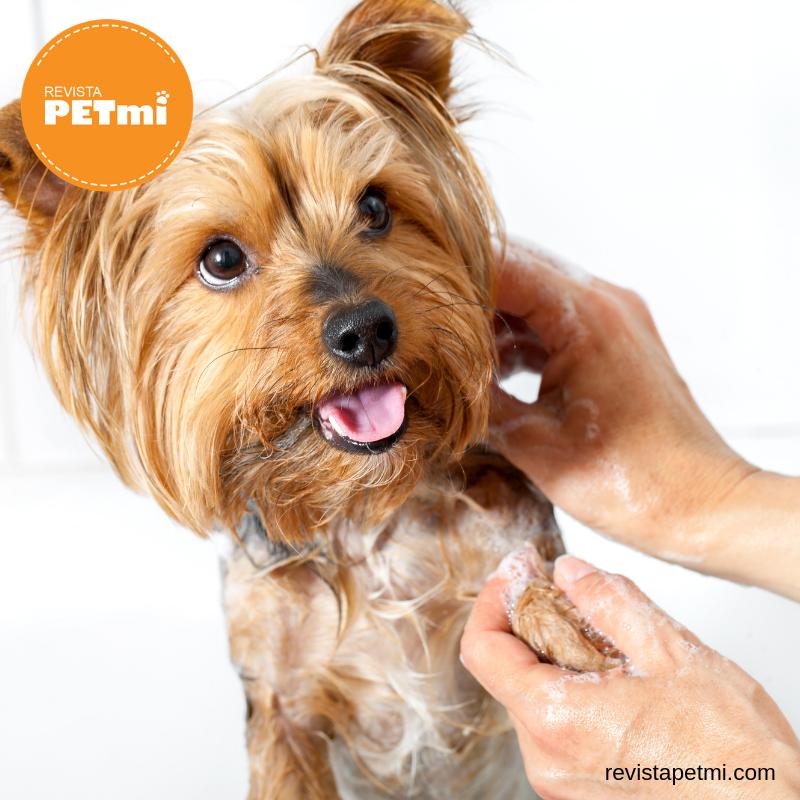 enfermedades de piel en tu mascota (1)