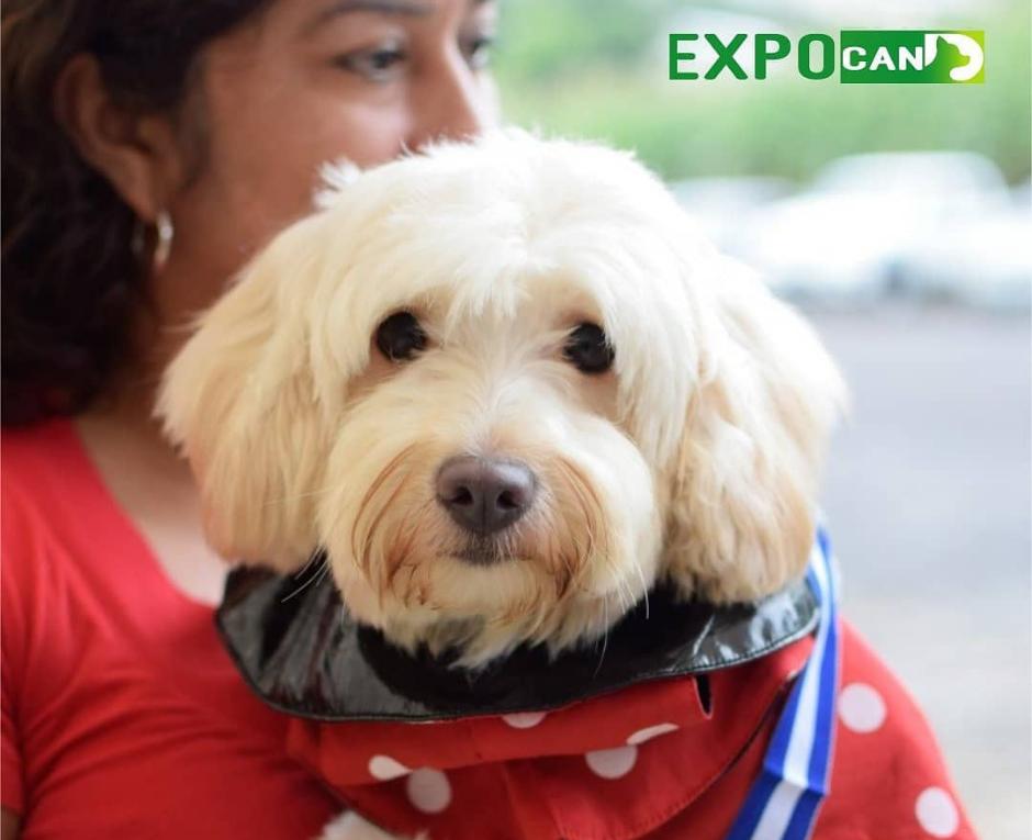 expo can 2019 a favor de la niñez de guatemala