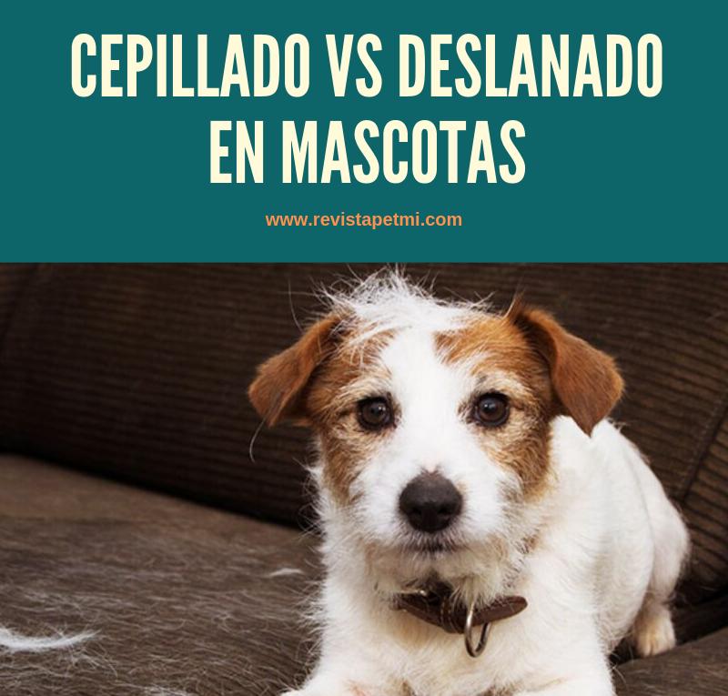 la diferencia entre el cepillado vs deslanado en mascotas