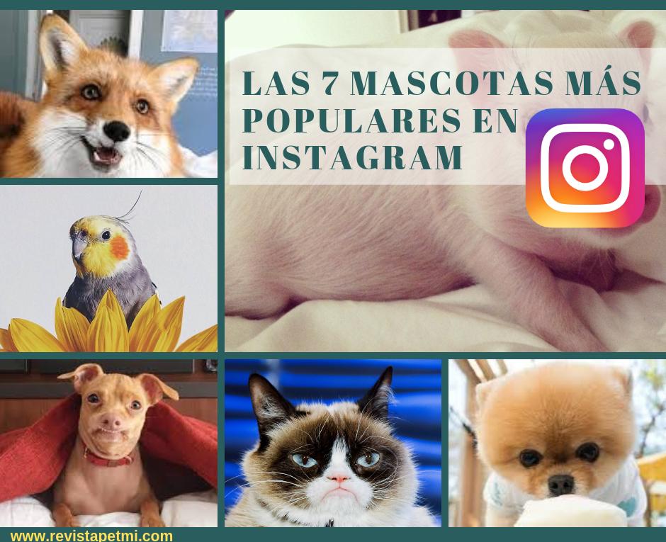 las mascotas más populares en Instagram 2019