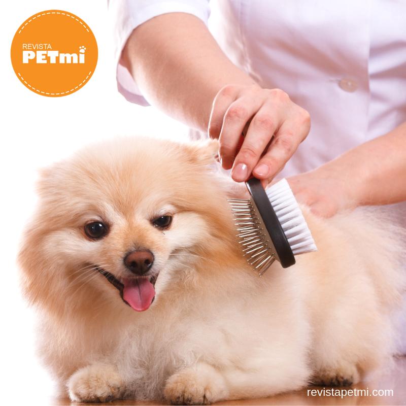 tips para cepillar a tu perro (1)