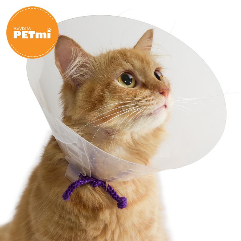 alimentar a un perro o gato esterilizado (1)