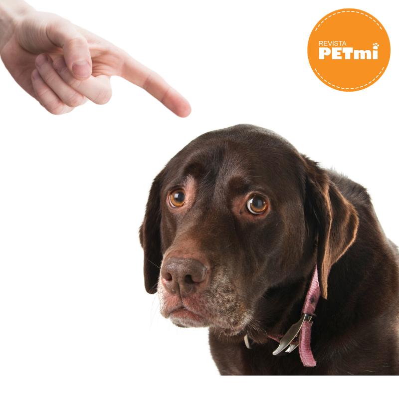 corrige a tu perro, consejo para que no muerda tus zapatos