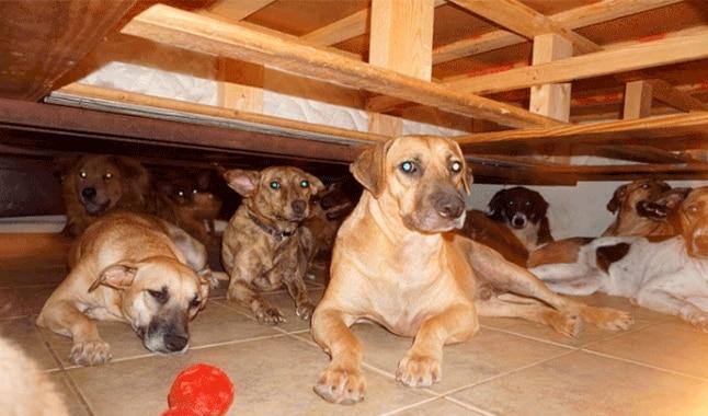 mujer salva a perros del huracán dorian