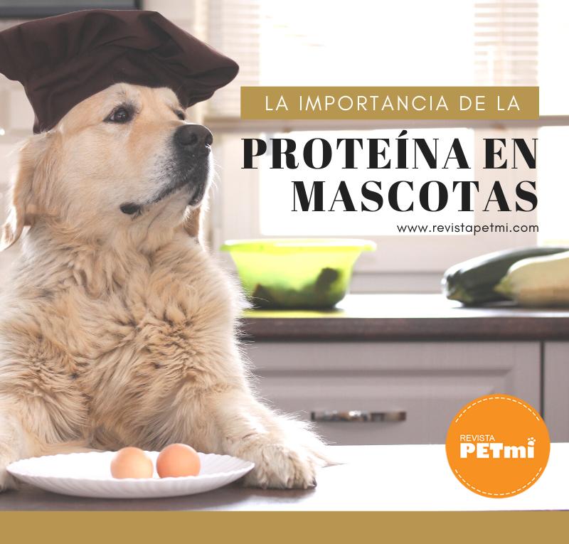 La importancia de la proteína en mascotas (1)