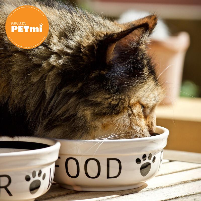 Problemas urinarios en gatos (2)