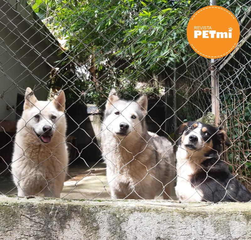 Promoviendo la responsabilidad y generosidad por las mascotas