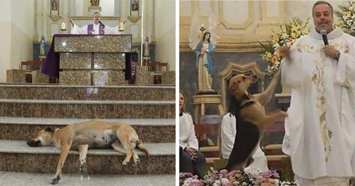 perros abandonados a Misa