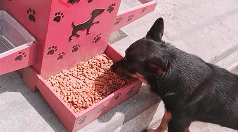 construirán comederos para perros callejeros en san miguel dueñas