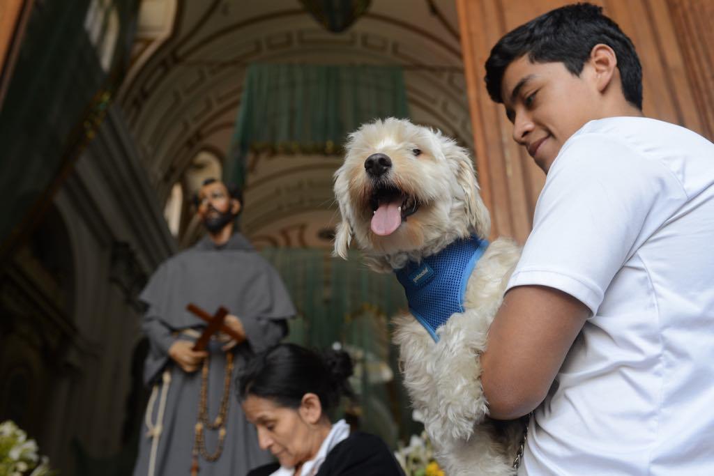 mascotas reciben bendición en conmemoración de San Francisco de Asis