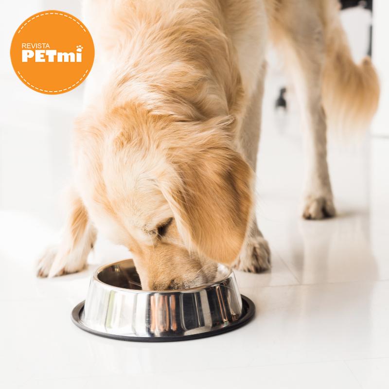 proteína en mascotas (1)