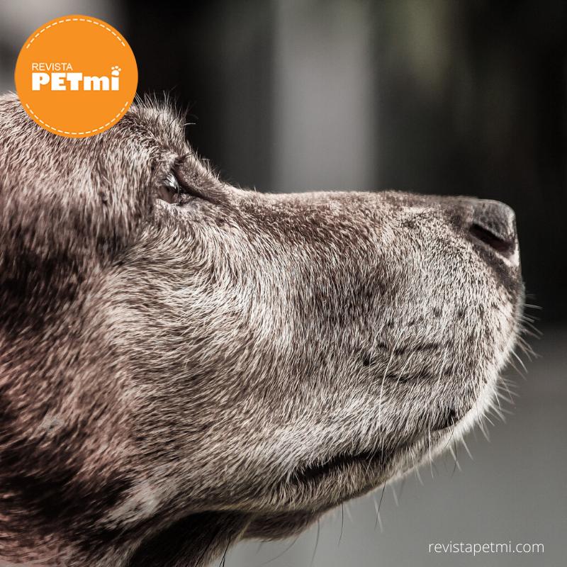 confesiones de un perro (5)