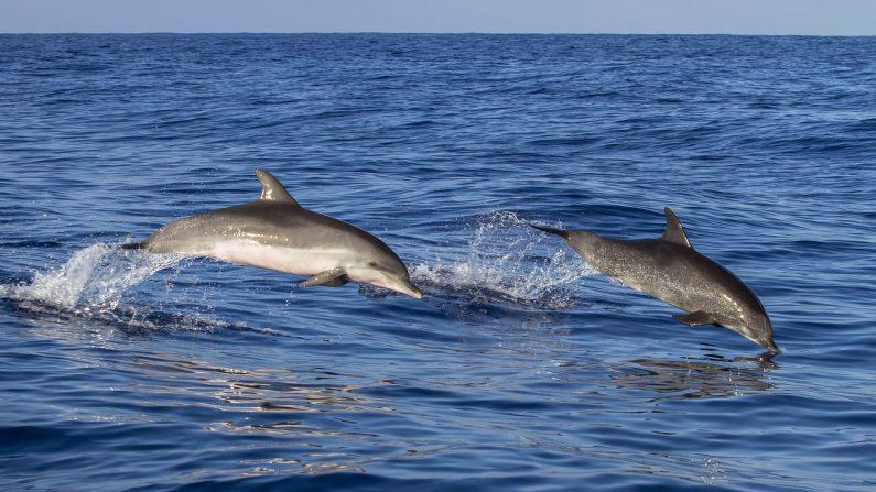 delfines salvan a un perrito que casi se ahoga