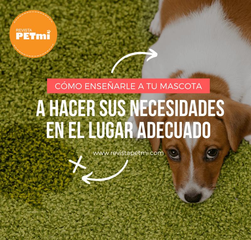 Cómo enseñarle a tu mascota a hacer sus necesidades en el lugar adecuado (1)