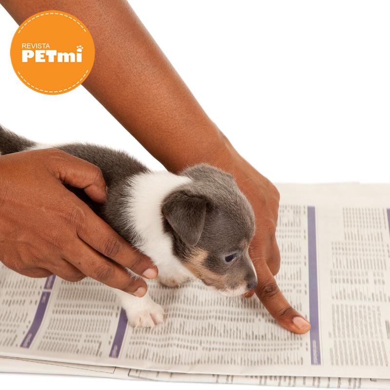 Cómo enseñarle a tu mascota a hacer sus necesidades en el lugar adecuado (3)