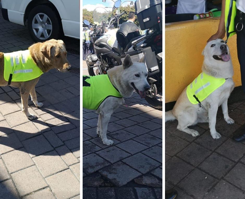 Conoce a los primeros miembros de la Unidad Canina de Villa Nueva