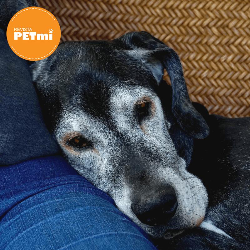 Síndrome de Disfunción Cognitiva en Perros (3) (1)
