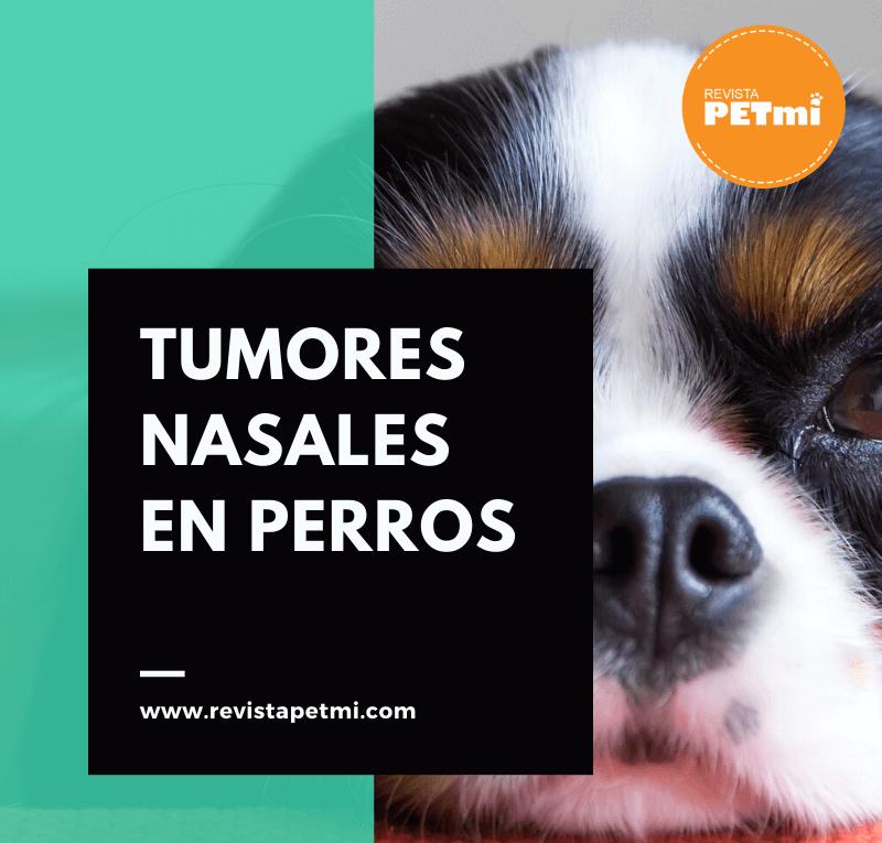 Tumores Nasales en perros (6) (1)