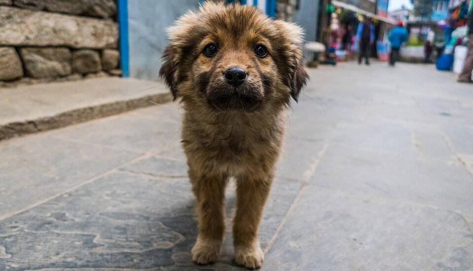abren oficina de bienestar animal (
