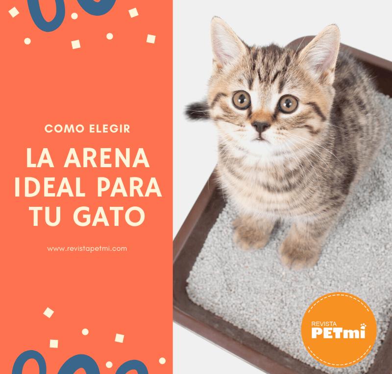 Como elegir la arena ideal para tu gato (2) (1)