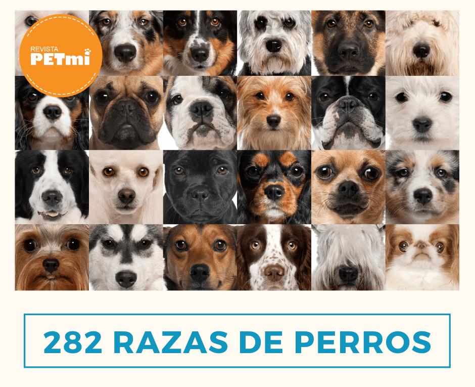 razas de perros (4) (1)